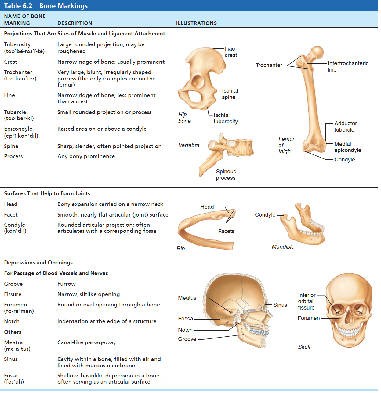 Table Lists Types Of Bone Markings Along With