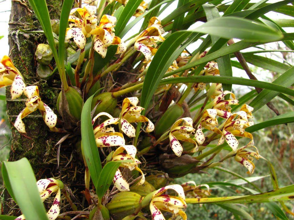 Encontrada no google em panoramio orhidee pinterest google