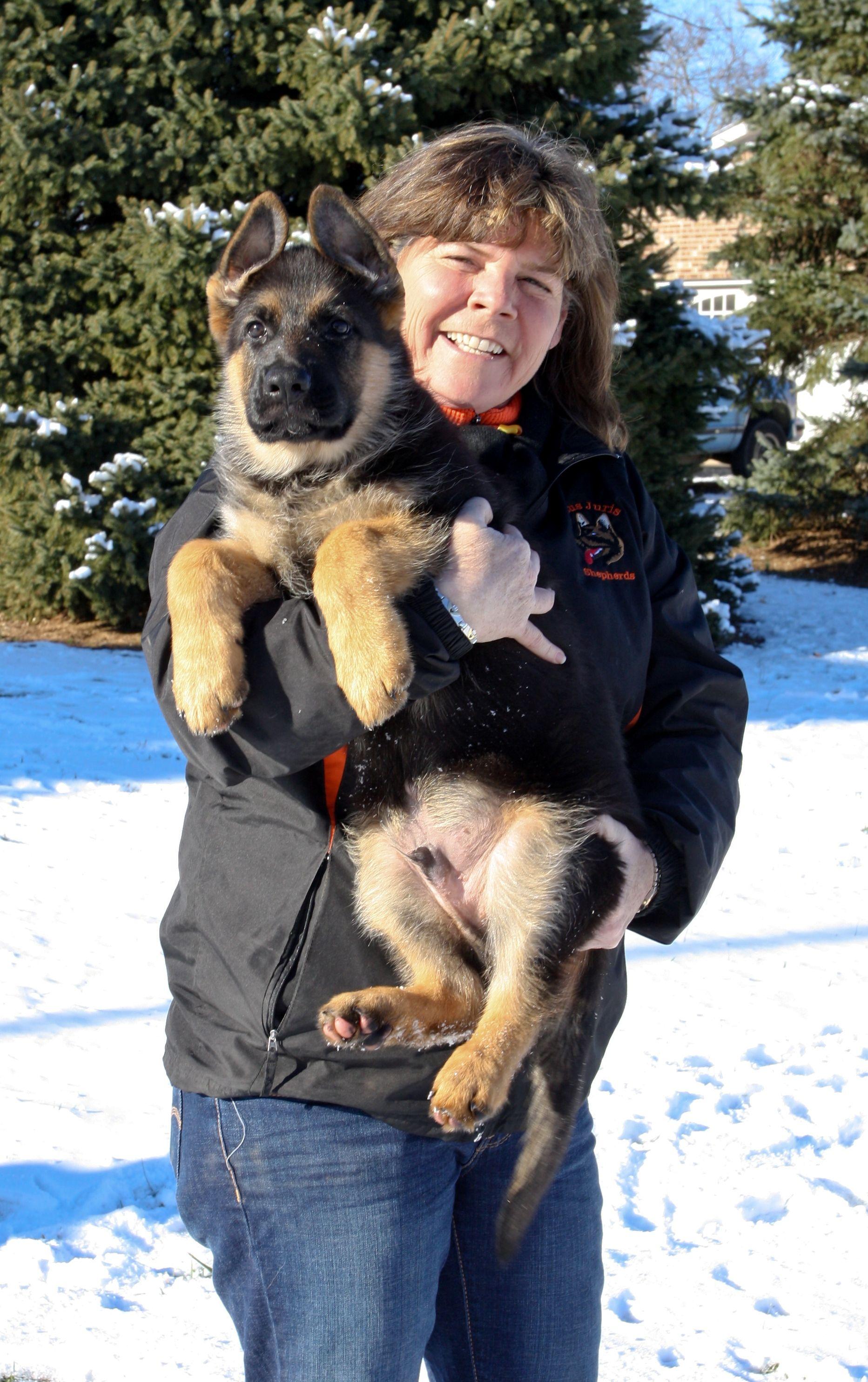 Megan Judge Top Dog In A Male Dominated Field Megan Judge Breeds