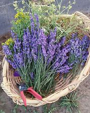 Fresh Lavender Flower Buy Fresh Lavender Flowers Dried Flowers Bunch Of Flowers Lavender Flowers
