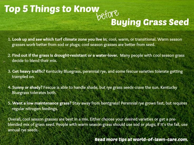 Doityourself guide to buying the right grass seed