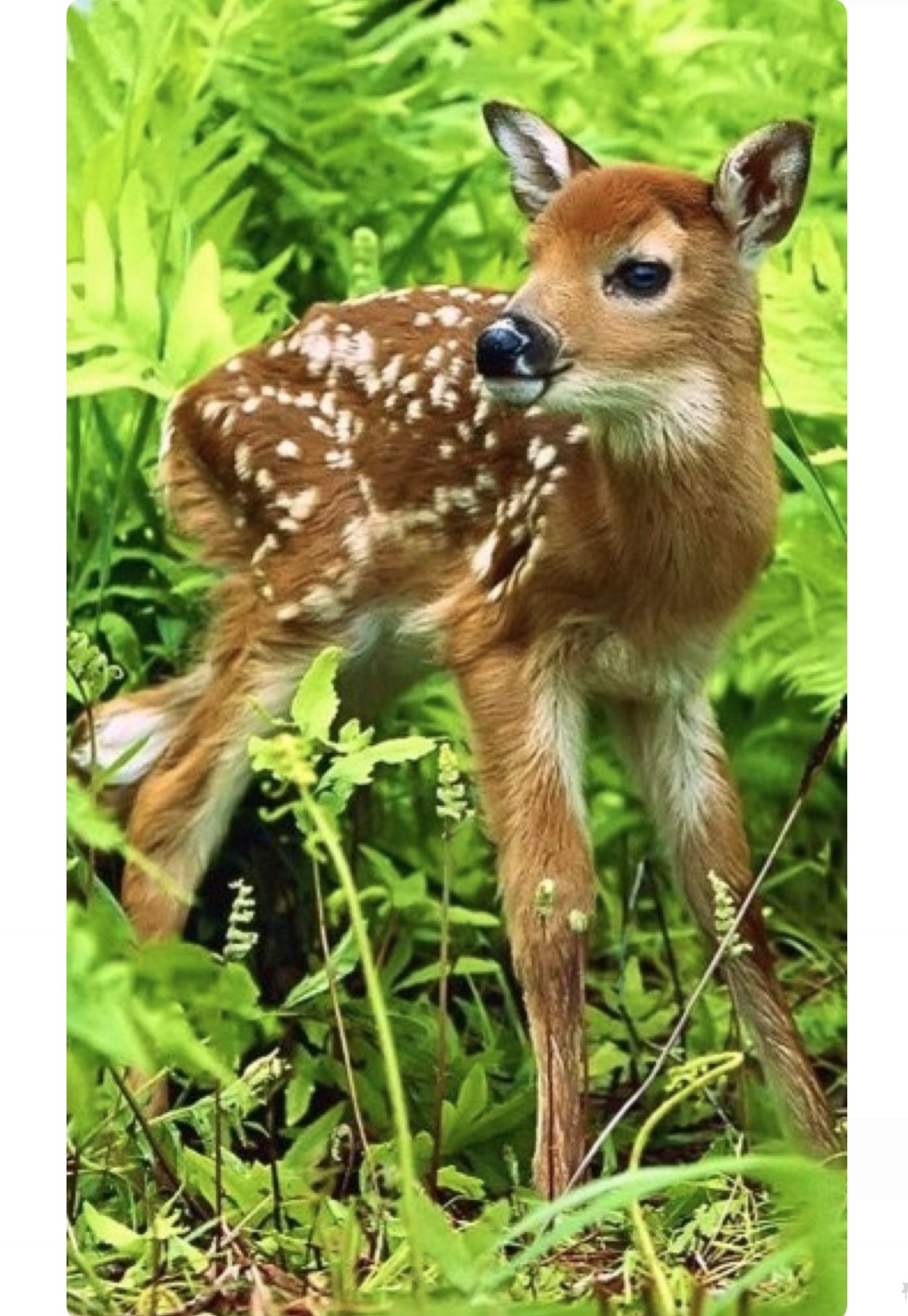 Dainty Little Spotted Fawn Pretty As A Picture Animals Beautiful Cute Animals Nature Animals