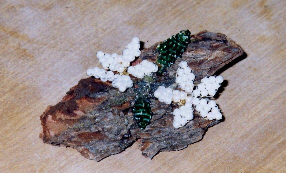 fiori di perline schemi gratis - Cerca con Google