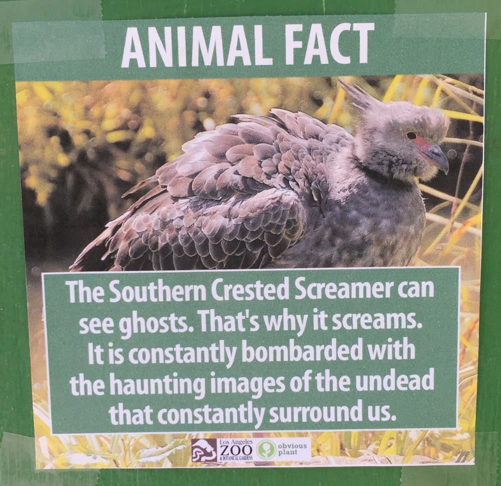 These Fake Animal Facts Were Posted At The Los Angeles Zoo Pleated Jeans Com Funny Animal Facts Animal Facts Fake Animals
