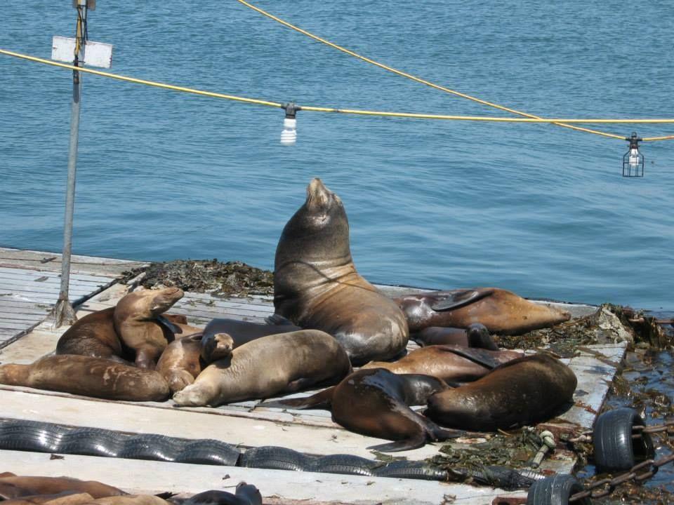 Sail past sea lions
