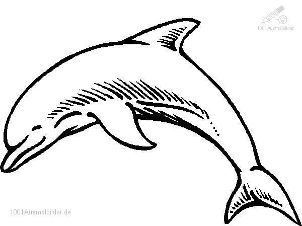 Ausmalbilder Mandala Delfin Imagui Tiervorlagen Ausmalen Delfin Malen