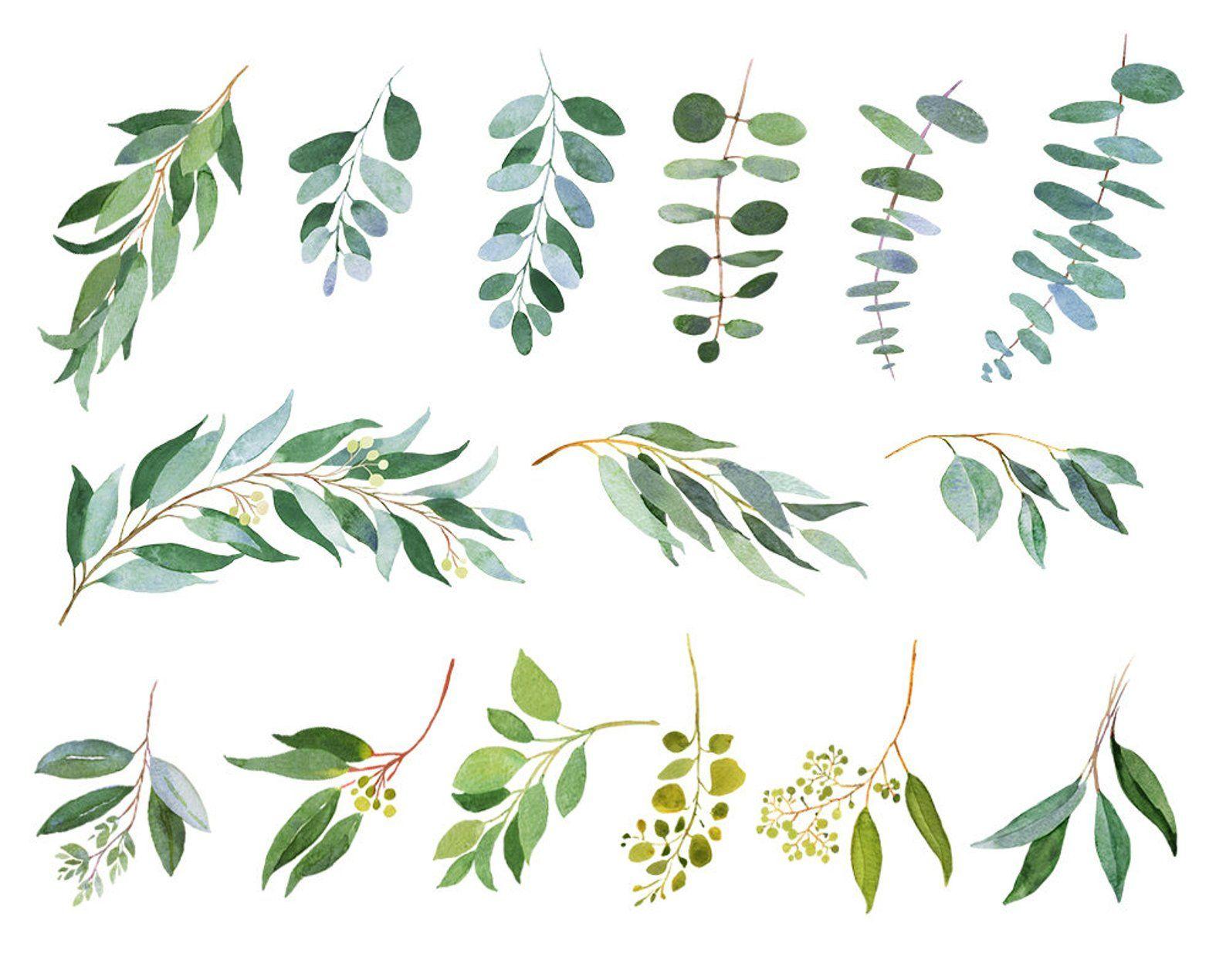 Eucalyptus Clipart Watercolor Illustrations Wedding Greenery
