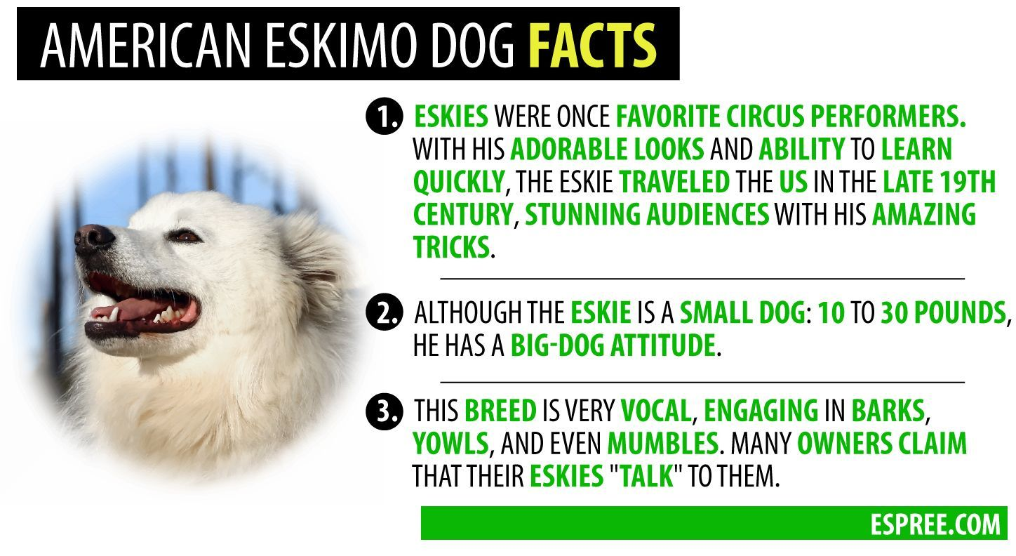 Affordable Grooming For Dogs Near Me American Eskimo Dog Facts