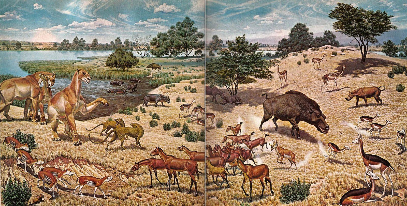 evolution of animals - HD1600×811