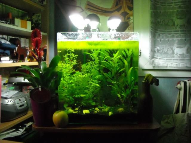 dennerle nano cube 60l proiecte de ncercat pinterest aquariums and planted aquarium. Black Bedroom Furniture Sets. Home Design Ideas
