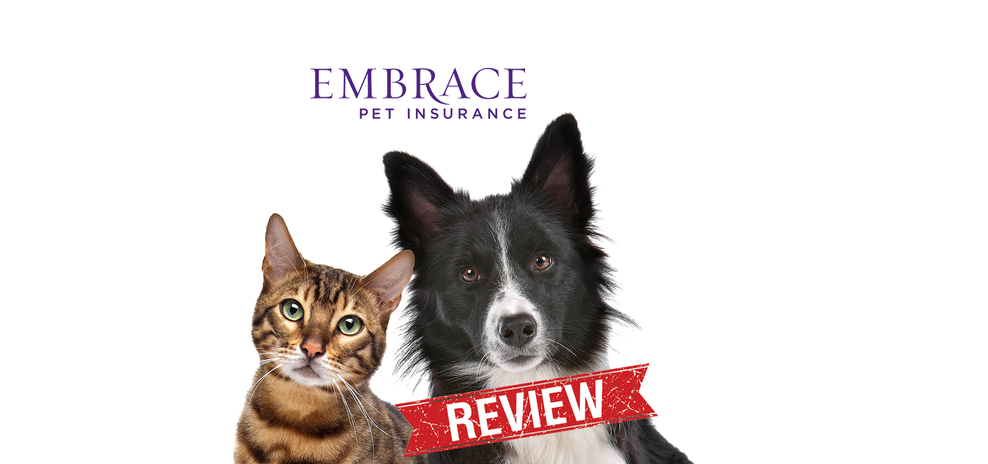 Embrace pet insurance reviews are overwhelmingly positive