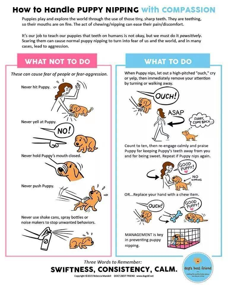 Poster How To Handle Puppy Nipping With Compassion Puppy Biting
