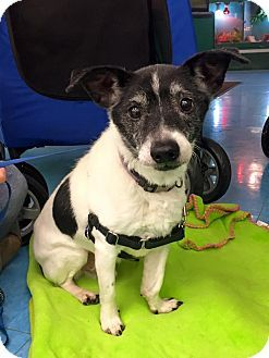 Cleveland Oh Terrier Unknown Type Small Mix Meet Glen Campbell A Dog For Adoption Http Www Adoptapet Com Pet Terrier Adoption