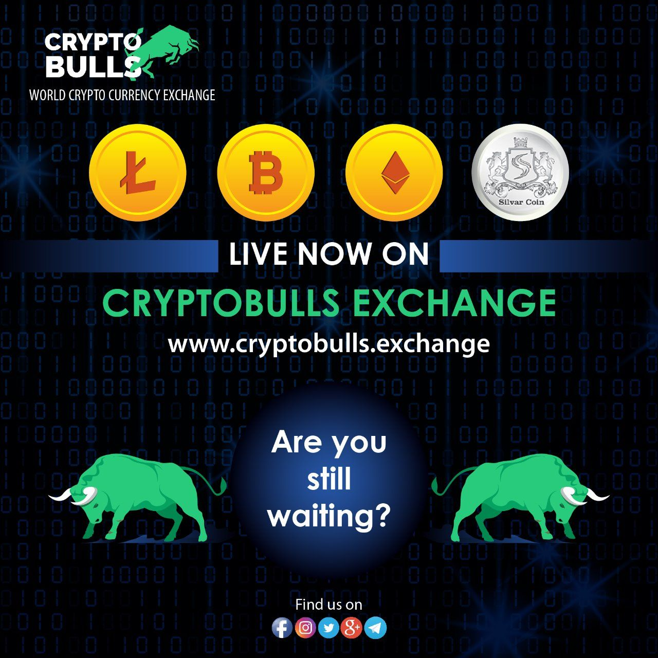 Cryptobulls is excited to announce the launch of our new