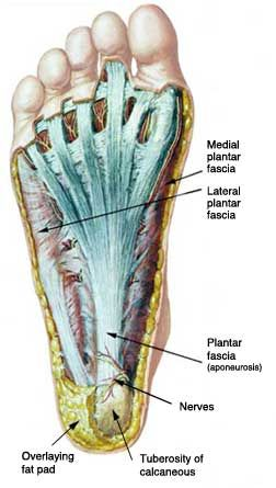 Very informative information about your feet! Learn about the ...