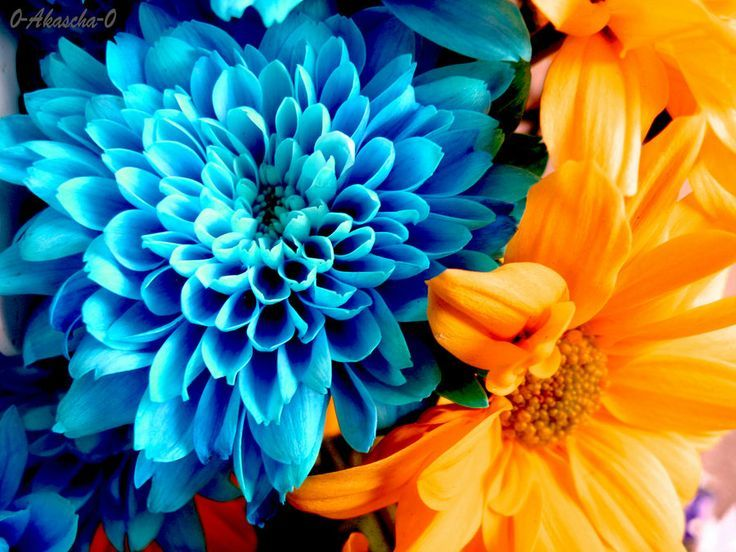 Flowers Of Opposite Colors Contrast