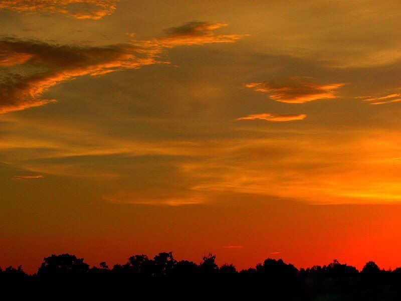 Good Morning East Texas!  Photo taken in Anderson County Texas.