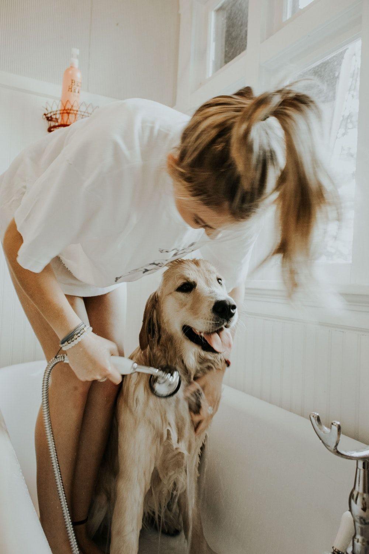 Dog Ear Tips Dry Dog Smells Dog Bath Dogs