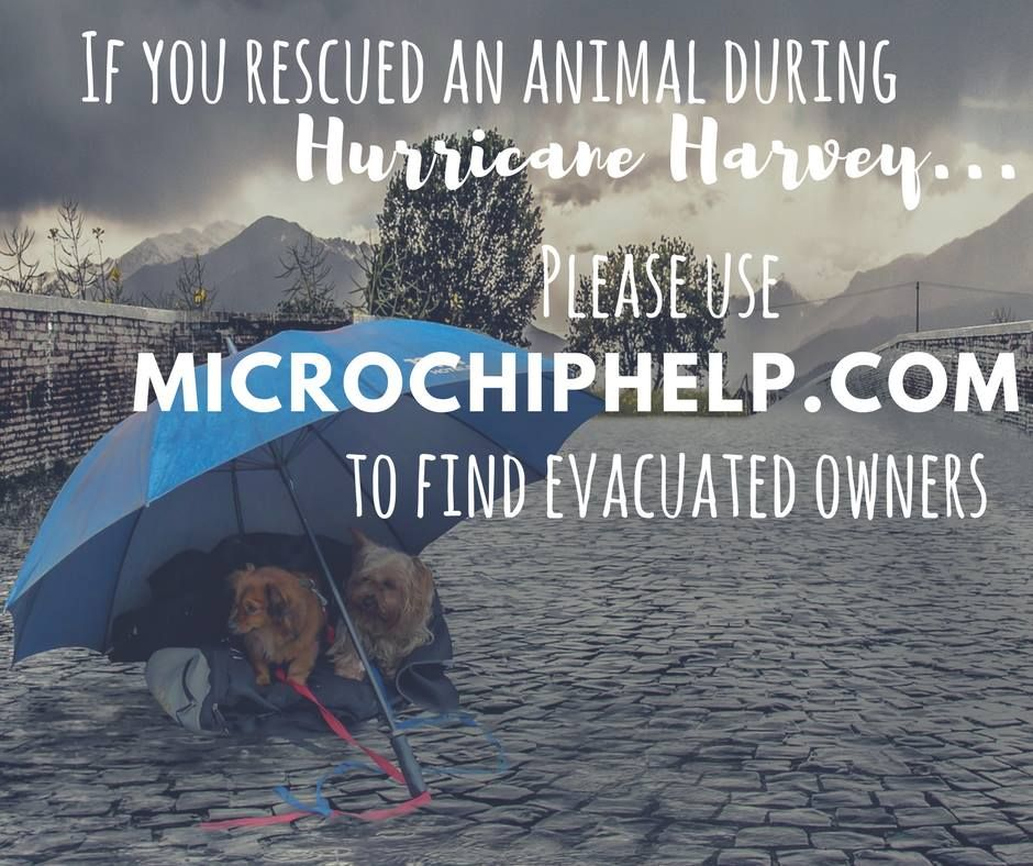 Dead End Microchip We Can Help Lost Dogs Of America And Helping