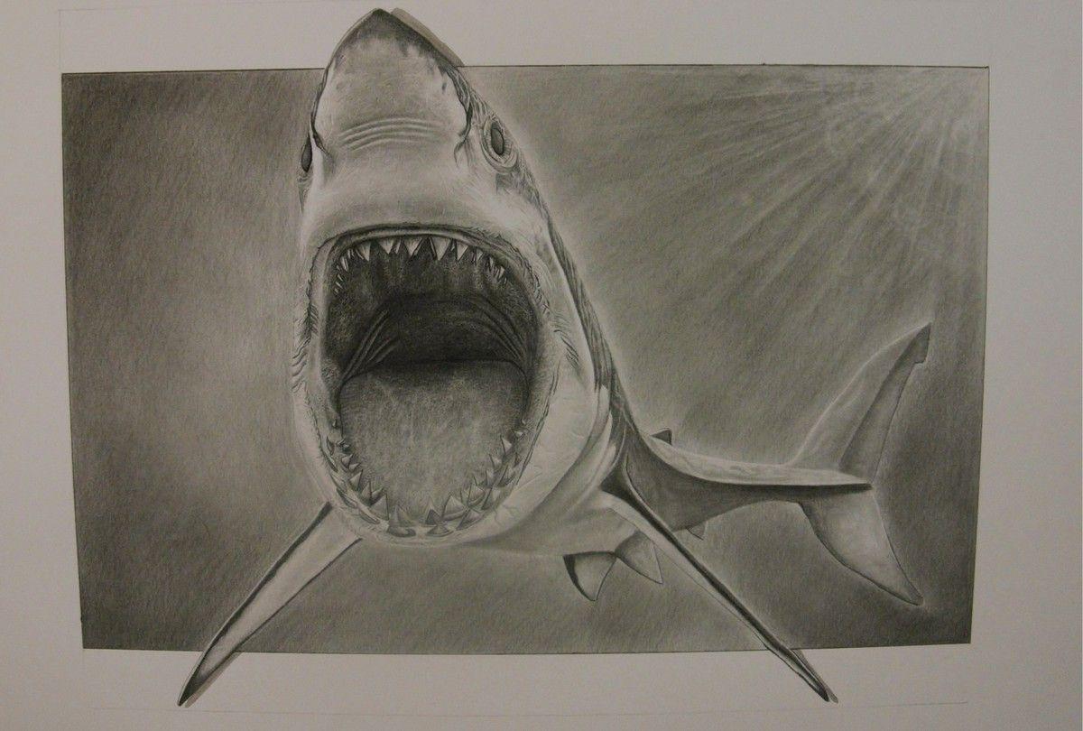 переделал акулы картинки карандашом небольшая подборка интересных