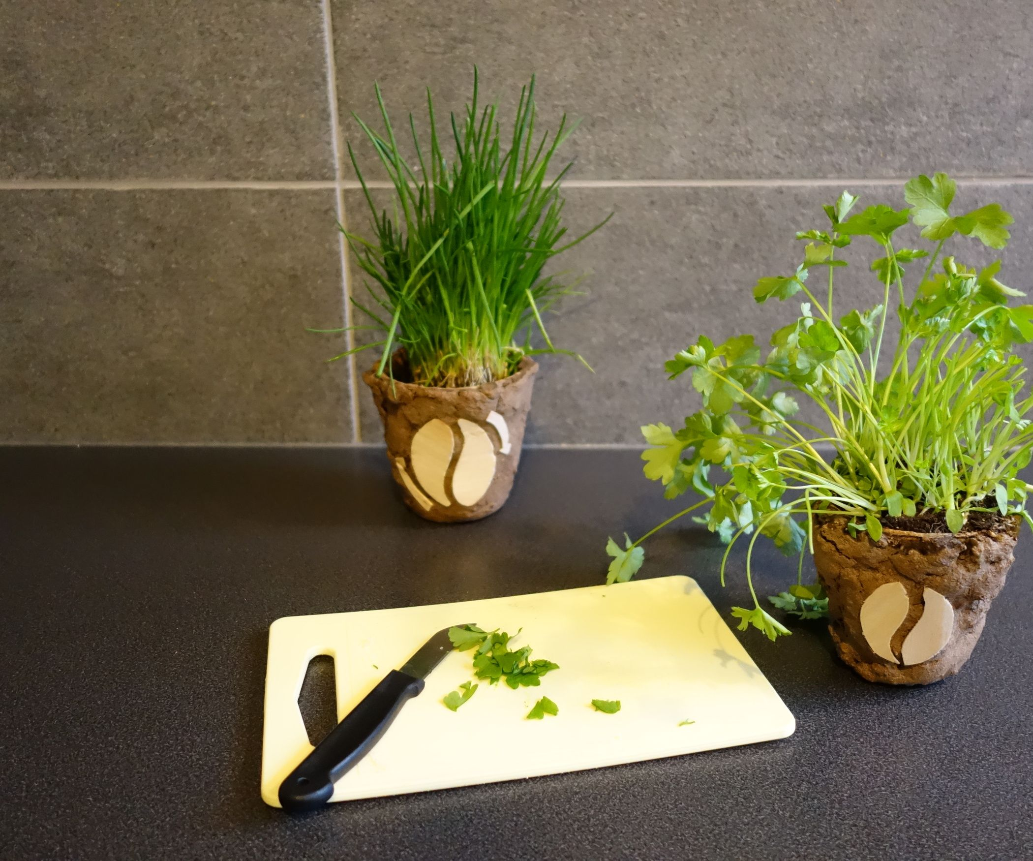 Diy Biodegradable Pots: Biodegradable Flower Pots Out Of Coffee Grounds