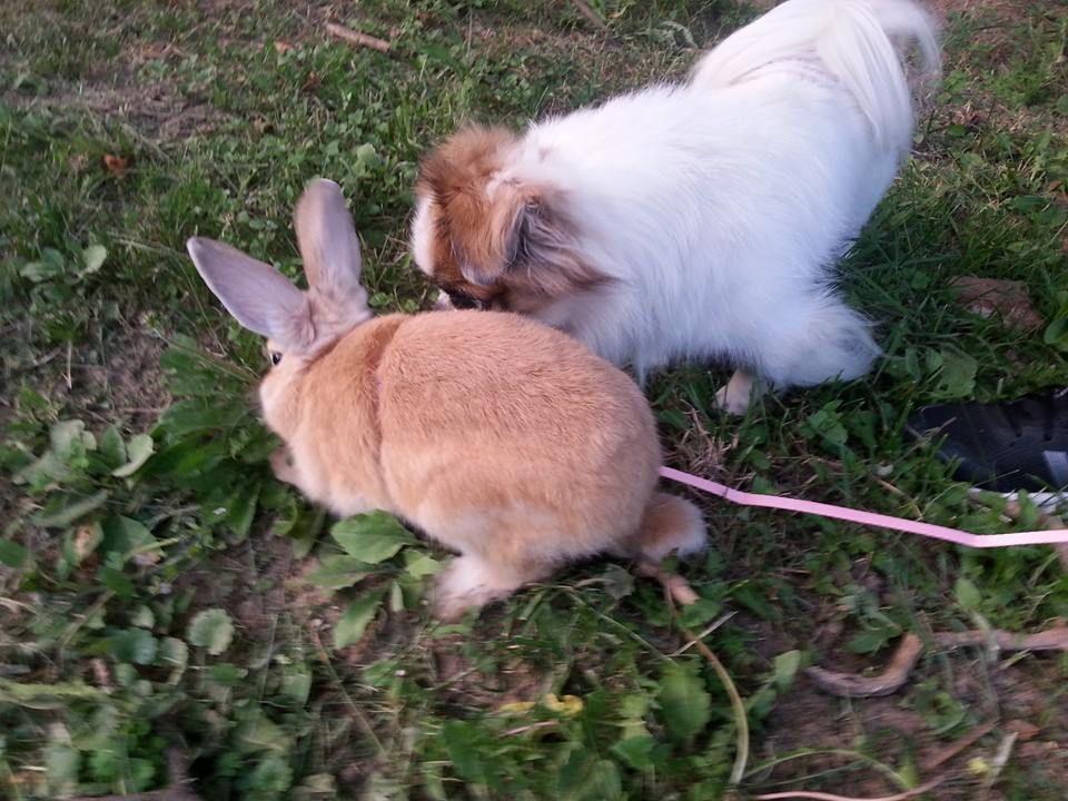 My dog and bunny