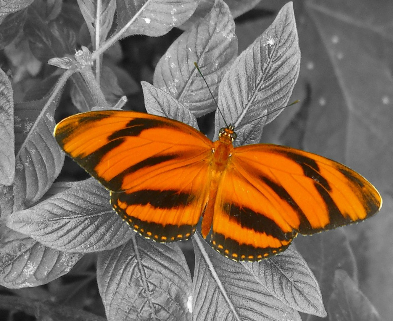 Orange And Black Butterfly Black And White Background Jpg 1328 1086 Black And White Background Butterfly Black And White Orange And Black Butterfly