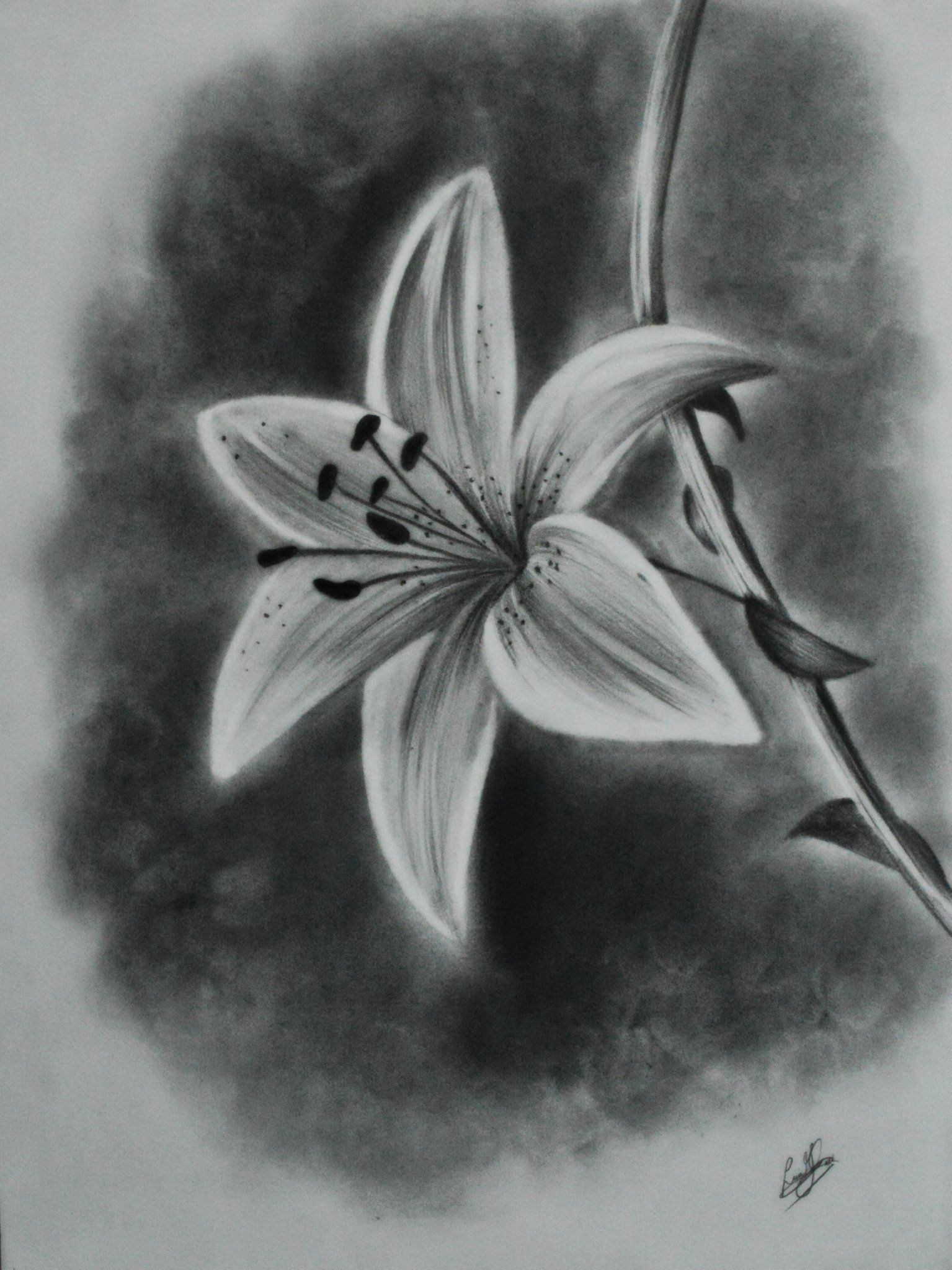 40 beautiful flower drawings and realistic color pencil for How to draw a really good flower
