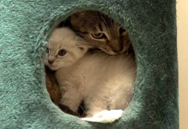 Inseparable Furiends | Baby cats, Cat pics, Cats