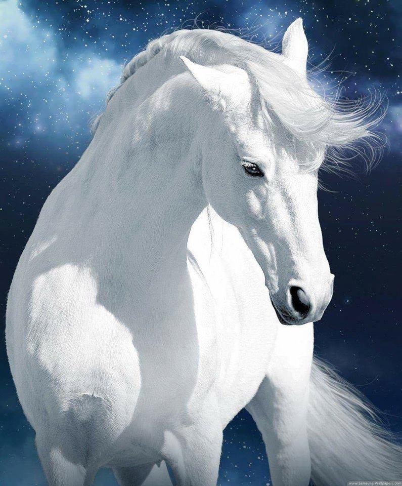 Magical Horse Wallpaper Cute Horses Horses
