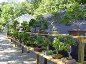 Bonsai West Is Located In Littleton Ma Aahhhh Bonsai Plants Garden