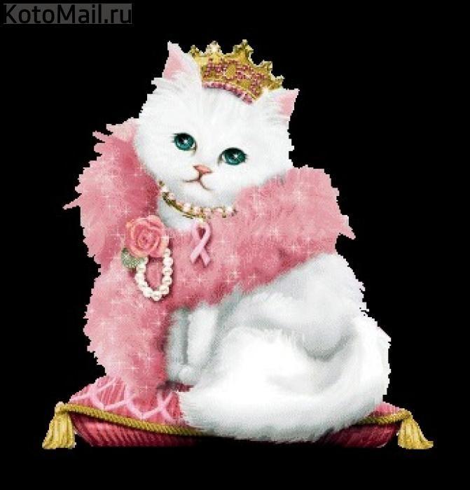 Картинки котик блестящие