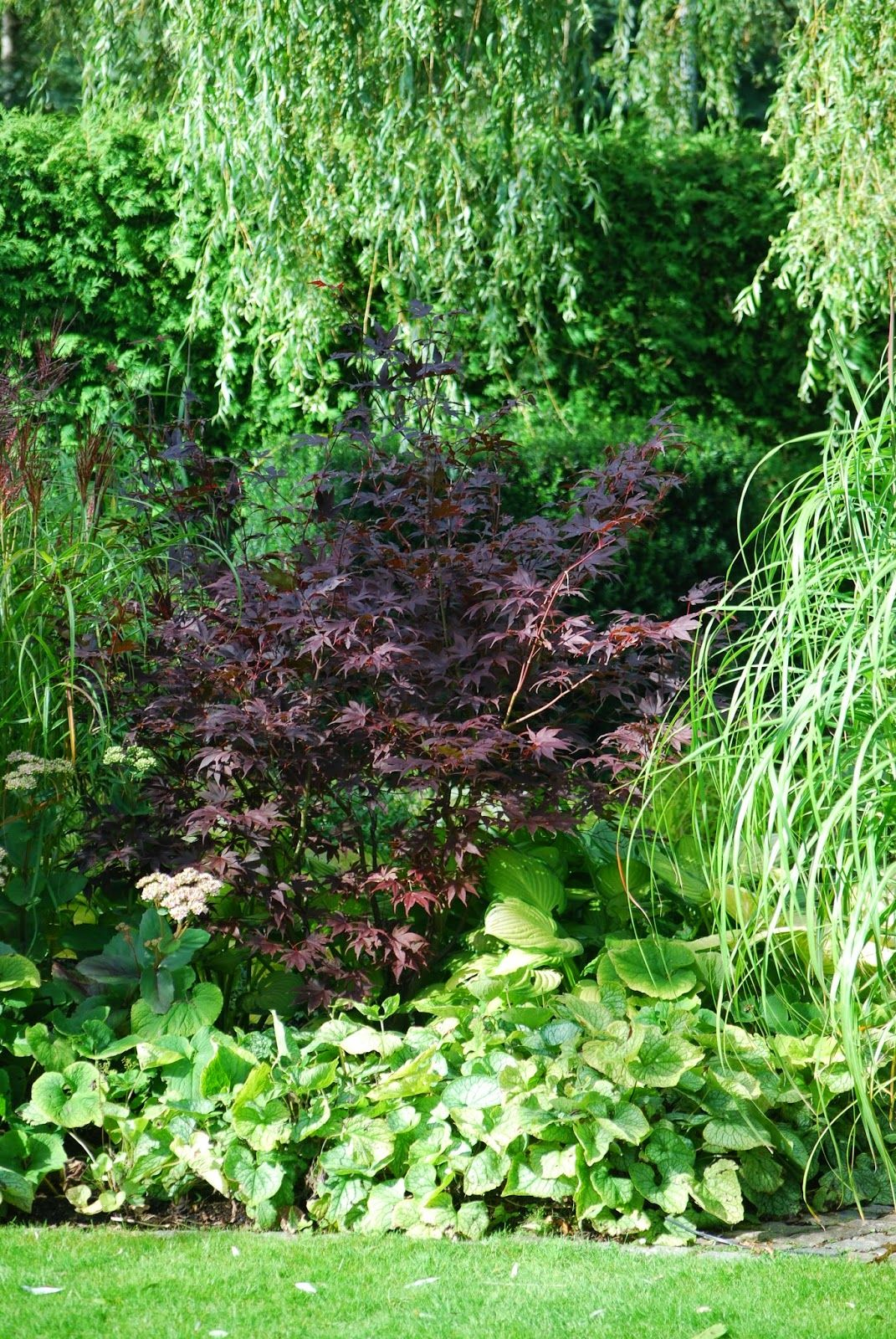 Japanska Lönnar I Min Trädgård Den Gömda Trädgården Garden Acer