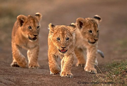 Leader of the pack...