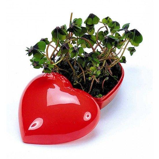 Man muss das erst Herz öffnen, damit das Glück(sklee) wächst...