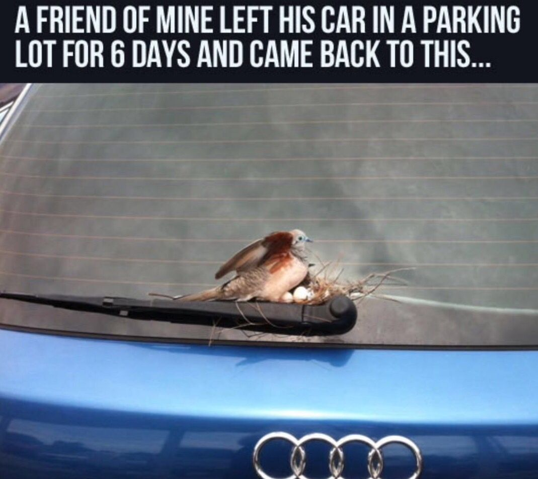 Funny Funny Pictures Funny Memes Funny Animal Pictures