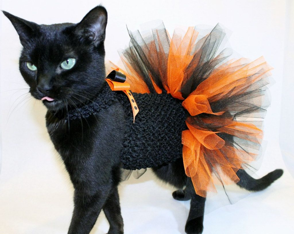 Coolcats Orange And Black Halloween Costume Tutu For Cats With