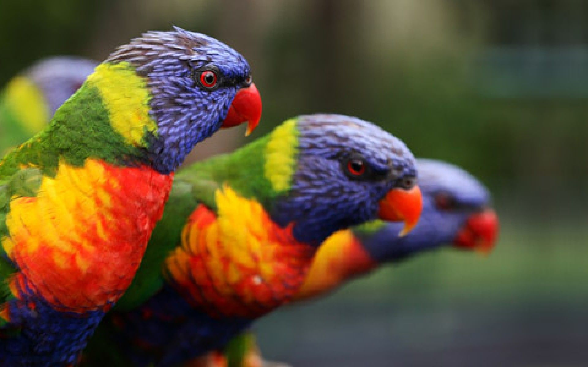 Wallpaper download free image search hd - Parrots Wallpapers Downloads Free 1920 1200 Parrots Pictures Wallpapers 55 Wallpapers Adorable