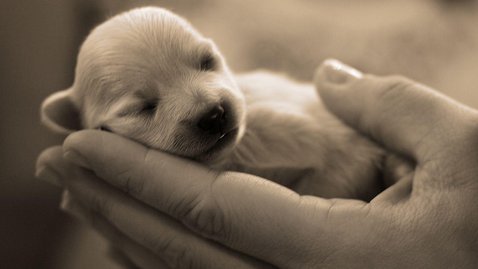 Sweet baby...