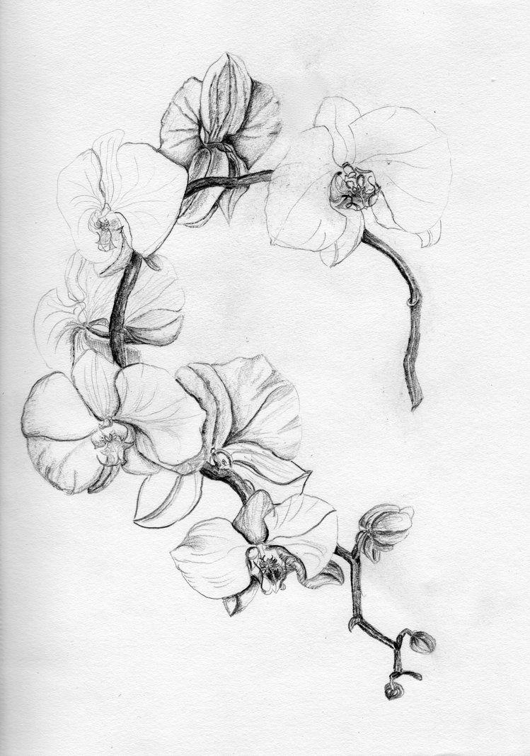 orchidee by migas90 tatouage pinterest tatouage orchidee dessin orchid e et tatouage. Black Bedroom Furniture Sets. Home Design Ideas