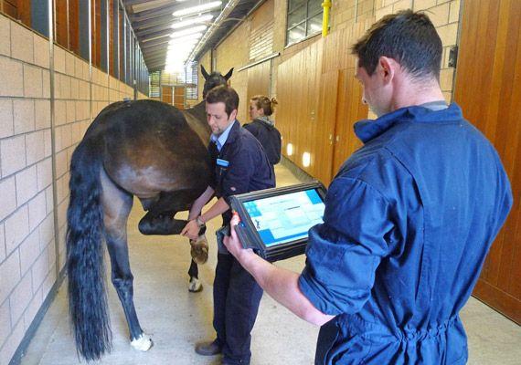 Wireless sensors allow objective lameness assessment