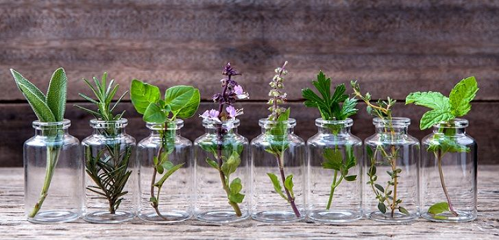 les 25 plantes que vous pouvez cultiver facilement dans l eau jardinage pinterest jardins. Black Bedroom Furniture Sets. Home Design Ideas