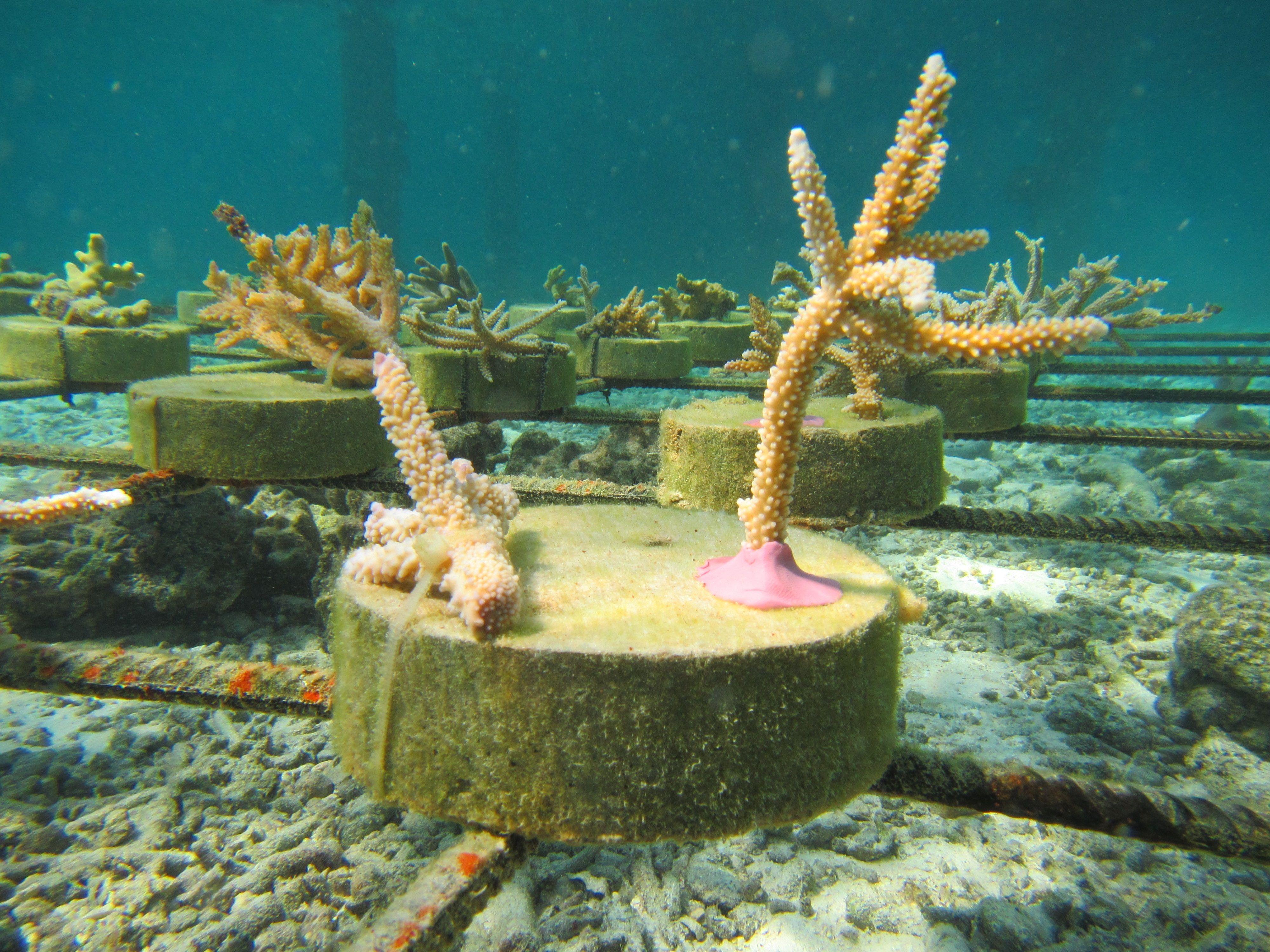 Pin by ann scottasia on outrigger konotta maldives resort announces