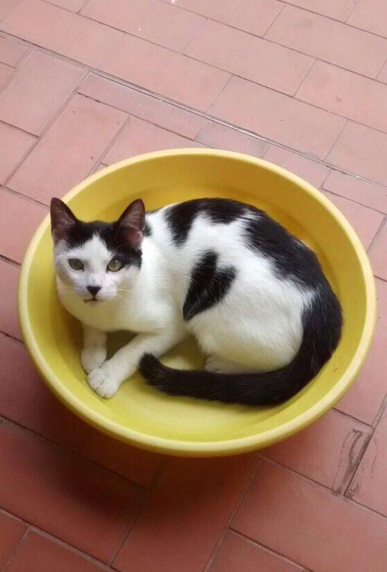 My Cat ....