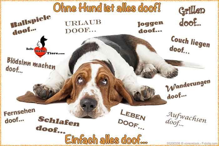 ohne hund ist alles doof hunde sind engel ohne fl gel pinterest hunde tiere und hunde bilder. Black Bedroom Furniture Sets. Home Design Ideas