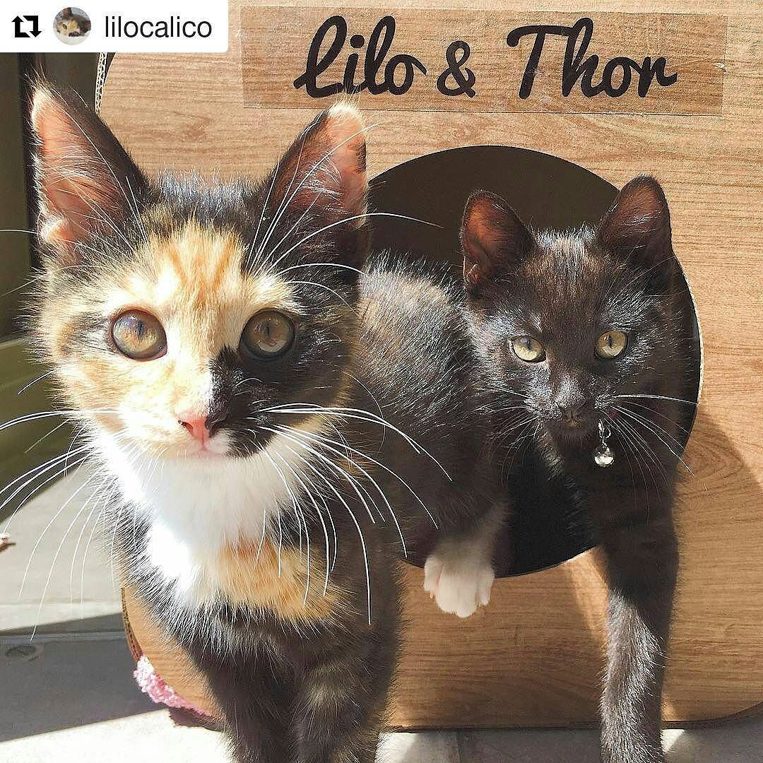 Repost Lilocalico Get Repost Hi My Furriends Today I Received This Wonderful Personalised Box In The Mail From The Wonderul Cute Animals Cute Cats Cats