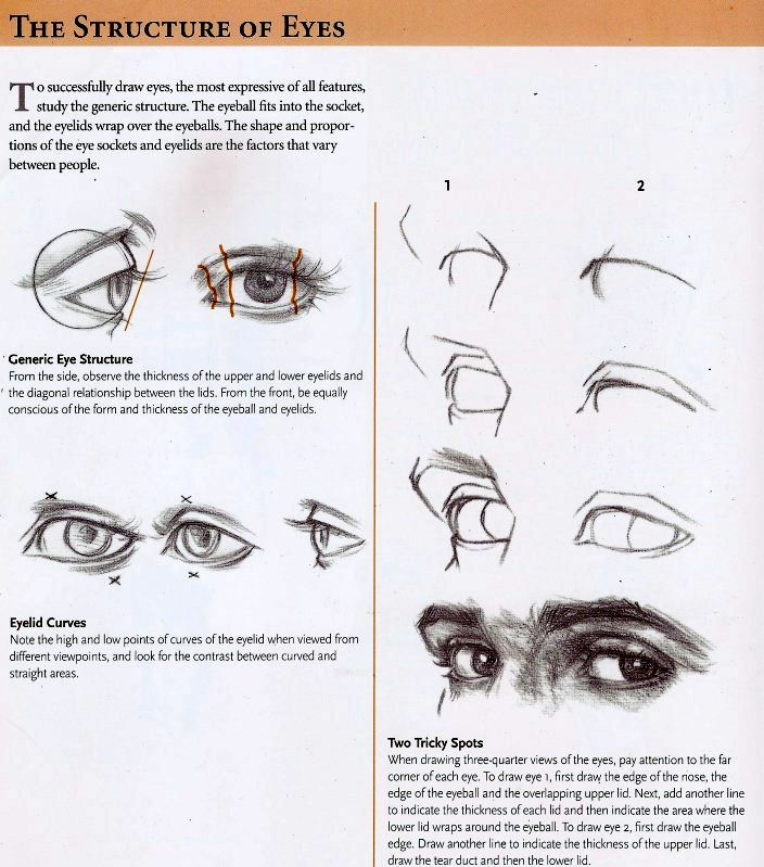 The structure of eyes. Drawing Tutorial.