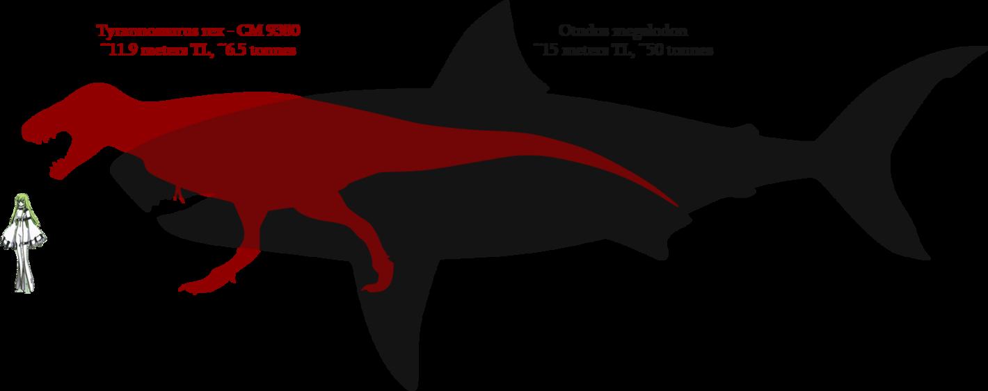 Tyrannosaurus And Megalodon Size Comparison Megalodon Tyrannosaurus Tyrannosaurus Rex