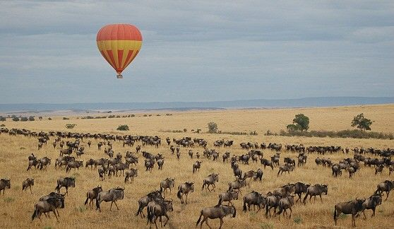 12 Things to Do in Serengeti National Park Tanzania 2021