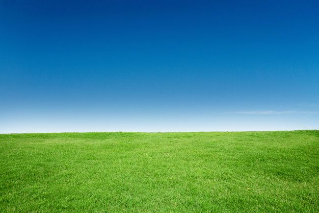 Green grass texture with blang copyspace  Premium Photo